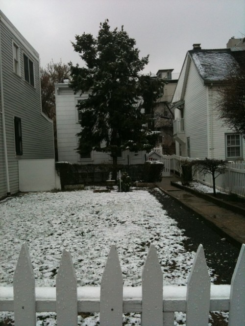 snowy Brooklyn spring